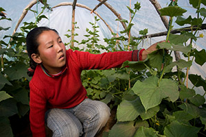 Woman in Mongolia in Greenhouse