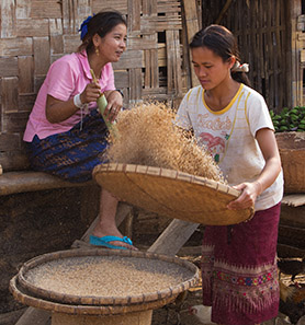 Woman in Laos Sifts Grain