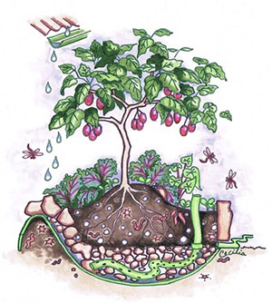 Wicking Bed Illustration