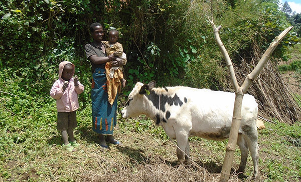 Woman in Rwanda by her cow