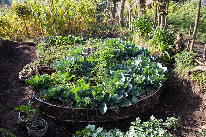 Kitchen Garden in Rwanda