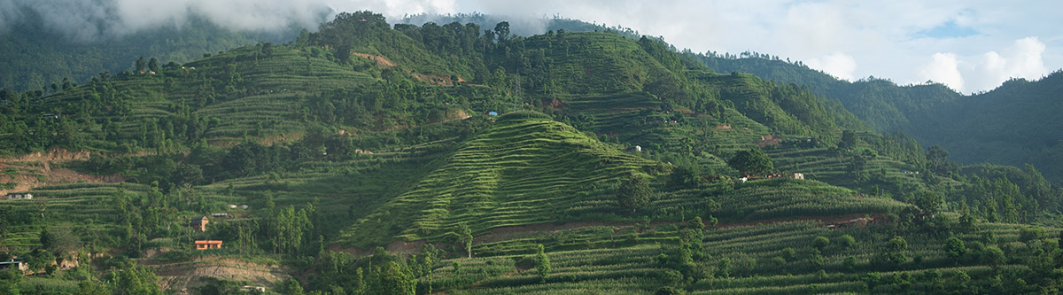Panorama View of Terraces in Nepal