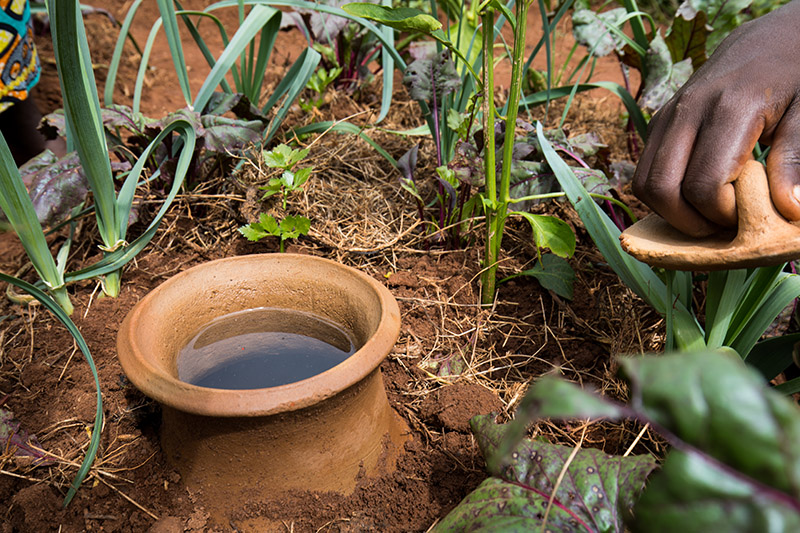 Clay Pots conserve water in Garden